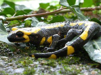 Le Sentier des Salamandres